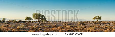 panoramic view of beautiful plain with trees at sunny day