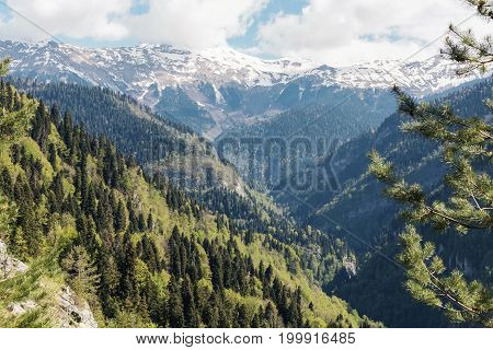 Mountain Landscape With Trees And Alpine Meadows.