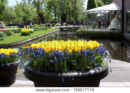 KEUKENHOF HOLLAND - MAY 14 2017: Vase with yellow tulips and blue hyacinths in the background of the pond in the Royal Keukenhof Park