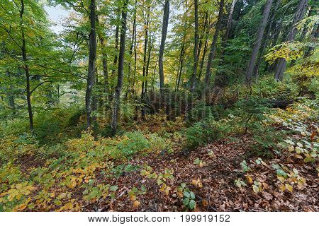 Trees in a damp autumn forest. Nature