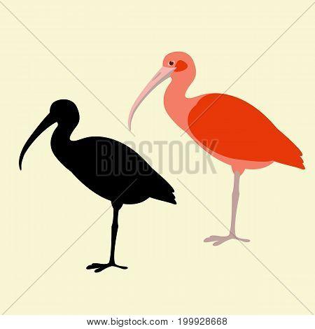 ibis bird vector illustration flat style black silhouette