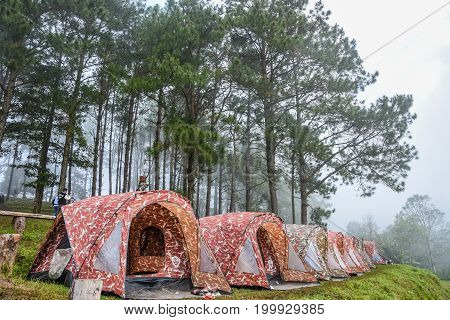CHIANGMAI THAILAND - OCTOBER 25 2015 : People with Camping tents during long holiday in Doi-Angkhang national park in Chiangmai Thailand