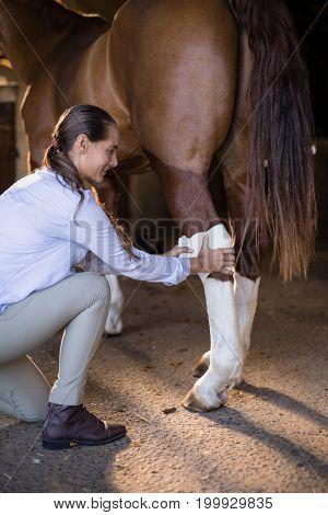 Side view of female vet bandaging horse leg at stable