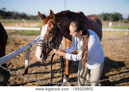 Female vet adjusting horse bridle at barn during sunny day