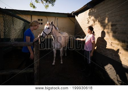 Young women cleaning horse at barn