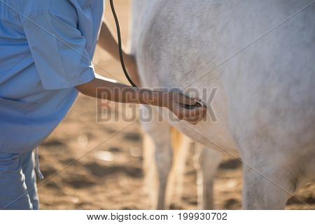 Midsection of female vet examining horse at barn