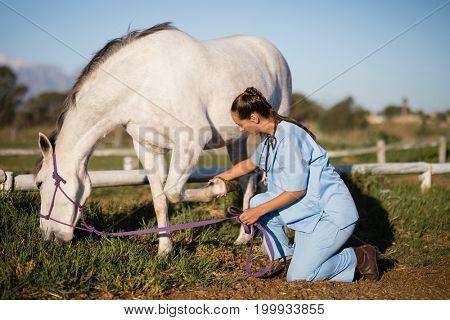 Side view of female vet examining horse foot while kneeling on field in paddock