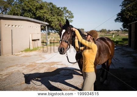 Side view of female jockey fastening bridle on horse while standing against stable