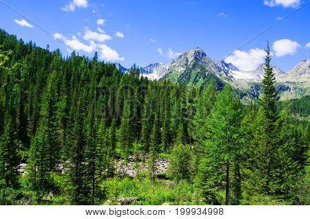 Spruce Forest On The Hillside Meadow In High Tatras Mountain Ridge