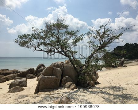 Lonely tree on a white sand beach between rocks on Bintan island in Indonesia with see in background