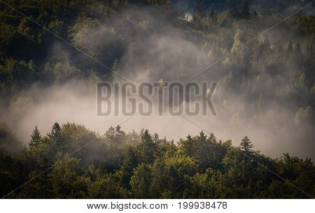 Morning fog cover the forest . . .