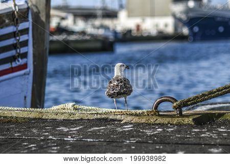 A seagull sitting on a quay in a harbor with a background of water and ships.