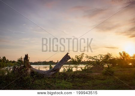 Dry deadwood on grass with morning sunlight in rural Thailand. Landscape background.