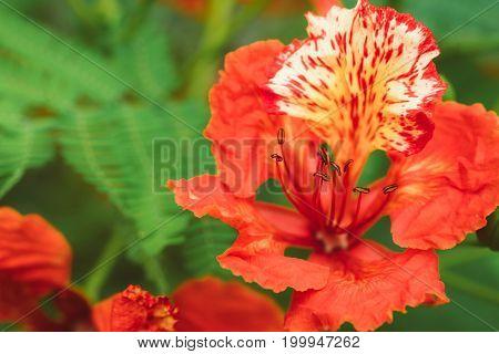 Orange Guppy Flowers