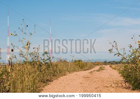 Airport beacon towers in the distance behind a small dirt road lined with sunflowers and weeds.