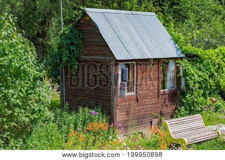 Small hut of wooden planks in a dense summer greenery