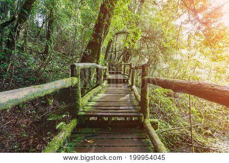 Beautiful rain forest during the rainy season at Ang Ka Nature Trail Doi Inthanon National Park Chom Thong Chiang Mai Thailand