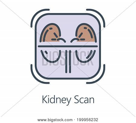Icon design kidney scan in flat line style. Symbol about health check up and medical concept.