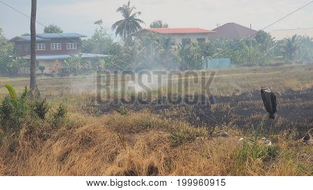 Agriculture industry Burn vegetable plots to clearing for replanting in the community at Bangboathong Nonthaburi province is suburb of Thailand Asia.