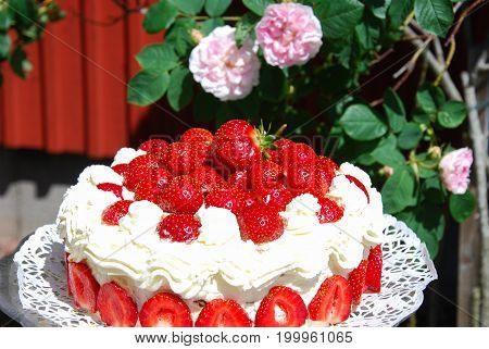 Homemade strawberry cake outdoors in a garden with pink roses