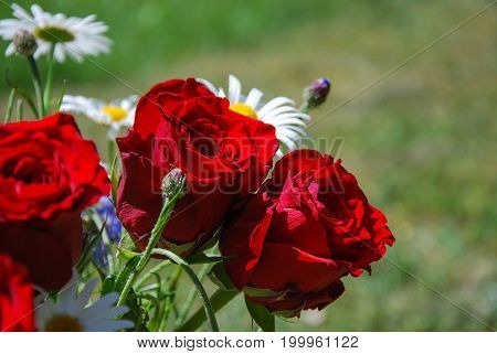 Closeup of a bouquet with beautiful red roses