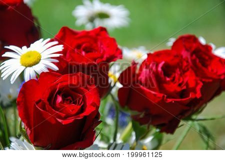 One red rose focused in a bouquet with red roses