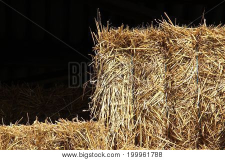 Hay bales for feeding horses to the stable