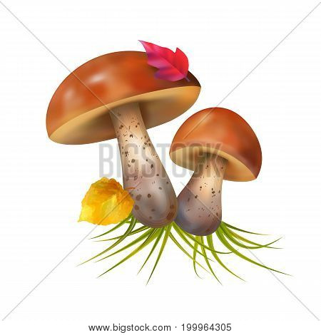 Vector composition with mushrooms on a white background