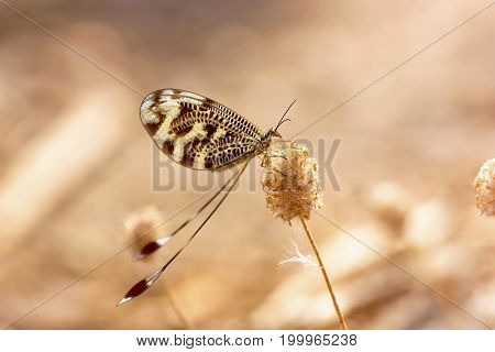 The butterfly sits on a plant closeup