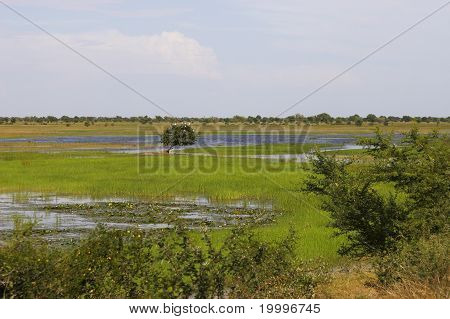 A swamp in Mali, Africa