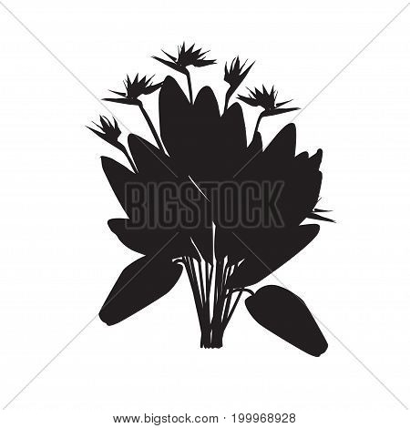 Silhouette of the blossoming royal strelitzia Silhouette of the blossoming royal strelitzia (Strelitzia reginae) in the black-and-white vector image on a white background