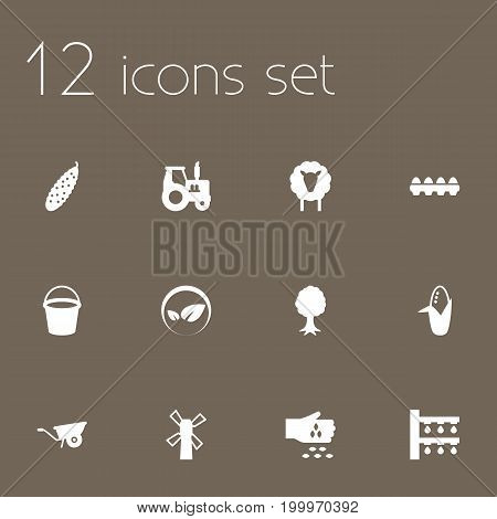 Collection Of Maize, Tray Of Eggs, Windmill And Other Elements.  Set Of 12 Agriculture Icons Set.