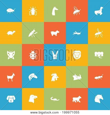 Collection Of Rooster, Livestock, Gnat And Other Elements.  Set Of 25 Zoo Icons Set.