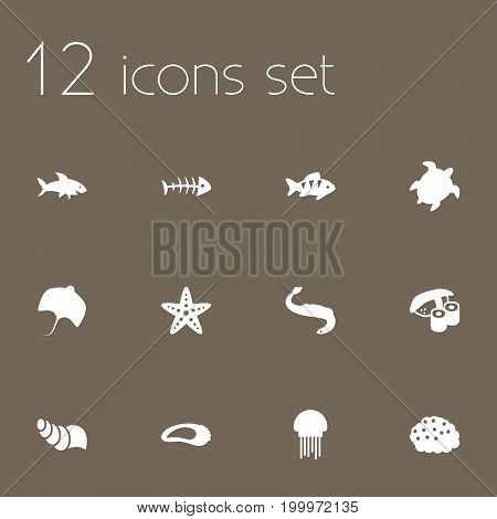 Collection Of Clam, Roe, Sea Star And Other Elements.  Set Of 12 Food Icons Set.