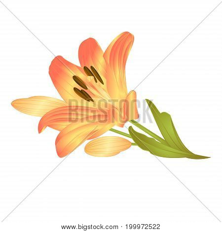 Yellow lily a yellow flower with leaves and buds vector illustration editable Hand drawn