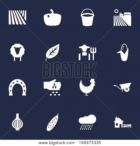 Collection Of Agriculture, Field, Talisman And Other Elements.  Set Of 16 Agricultural Icons Set.