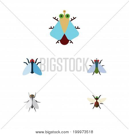 Flat Icon Buzz Set Of Fly, Bluebottle, Housefly And Other Vector Objects