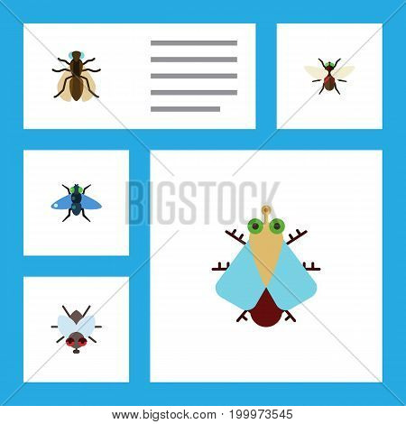 Flat Icon Buzz Set Of Tiny, Mosquito, Dung And Other Vector Objects