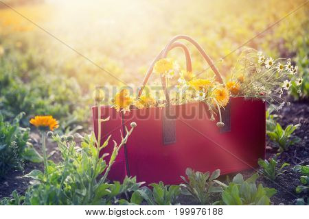 red basket full of yellow and white flowers on a field
