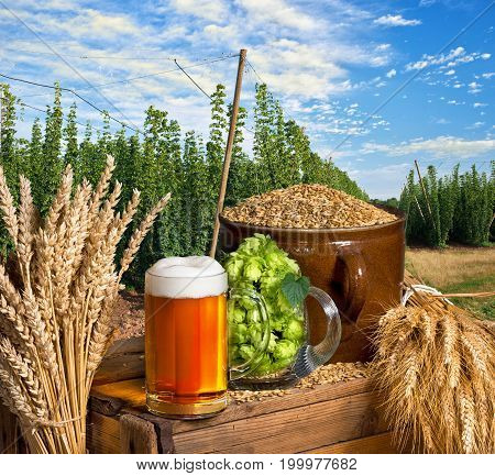 Glass of Beer and Raw Material for Beer Production.