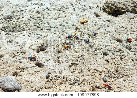 Seashell and its footprints on sunny sand near water. Sea inhabitant of Red sea in Egypt.