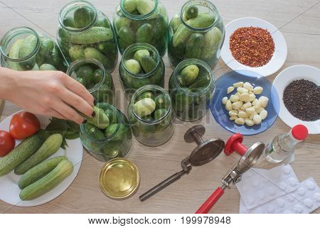 Step by step the flavors come together. A woman hands are hard at work stuffing cucumbers and dill into a pickling jar as she prepares home-made dill pickles. cucumbers pickles
