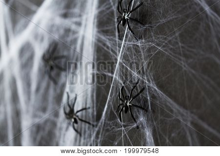 halloween, decoration and scary concept - black toy spider on artificial cobweb