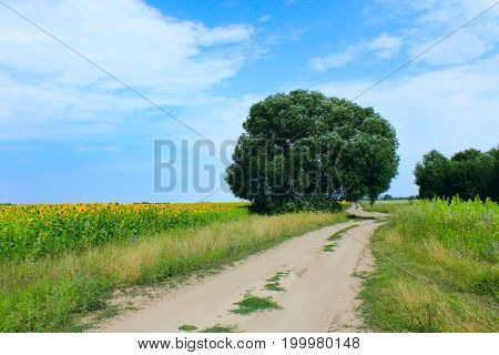 summer landscape with country road and fields of sunflowers
