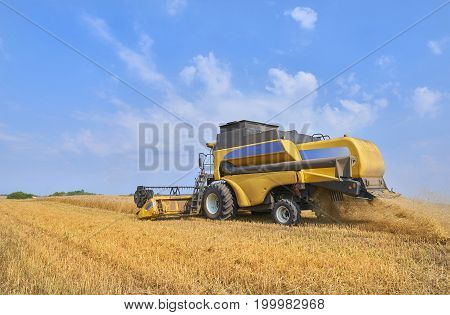 Yellow working wheat harvester combine machine on gold wheat fields in summer. August wheat harvesting in Russia, Europe. Harvester beast machine. Rye harvester on gold wheat fields and blue sky