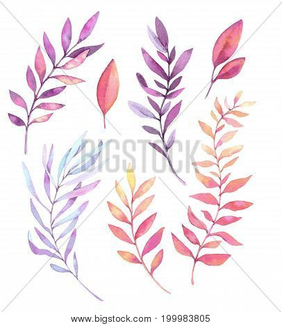 Hand Drawn Watercolor Illustrations. Botanical Clipart. Set Of Purple Leaves, Herbs And Branches. Fl