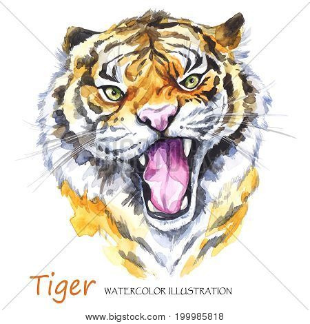 Watercolor roaring tiger on the white background. African animal. Wildlife art illustration.