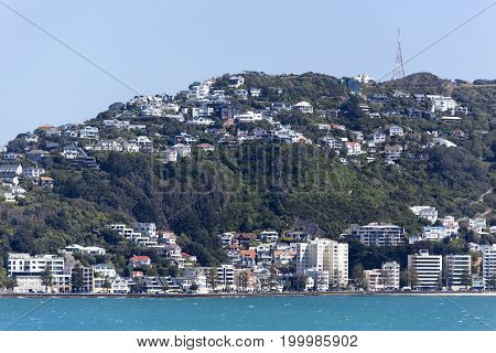 The view of Wellington residential district (New Zealand).