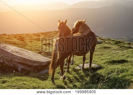 Couple of horses which love each other