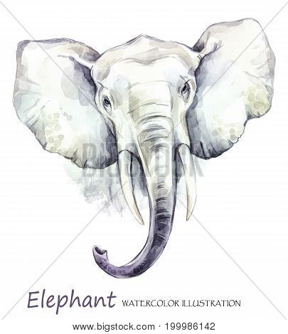 Watercolor elephant on the white background. African animal. Wildlife art illustration.